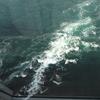 徳島ひとり旅2日目①