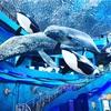 女子旅ウラジオストク#2 ロシア最大の水族館に行ってきたよ