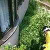 真夏の草刈り