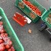 大量のトマトと今日もまた戦う