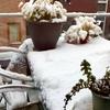 アムステルダム 雪物語