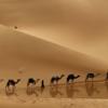 砂漠に憧れて
