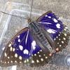一度は見たい憧れの蝶 オオムラサキ