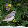 🦜野鳥の回【154】珍鳥を求め再び和歌山へ🆕 95種類目「オガワコマドリ」(4/16)