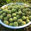 (サンデー農家)梅作りと梅シロップ。