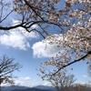 カタクリと桜満開。2021年の春の低山