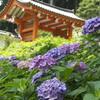 【神社仏閣】紫陽花の三室戸寺(宇治市)