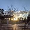 大晦日に神奈川県立保土ヶ谷公園を散策しに行ってみた。鴨がたくさんいました。(横浜市保土ケ谷区花見台)