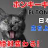 ホンキーキャット 日本語訳と解説 エルトンジョン 運命を変えてやる! Honky Cat Elton John - Honky Chateau 1 of 10
