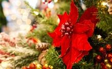 フライドチキンに大行列。これって日本だけ?さまざまなクリスマスの過ごし方