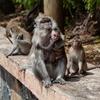 【広島市安佐動物園】三世代で楽しめる広島唯一の動物園をナビゲート!