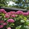 藤森神社のアジサイ、見頃や開花情報。御朱印あり。