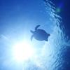 ♪透明度40mを超える慶良間諸島へご案内♪〜沖縄那覇少人数ダイビングライセンスショップ〜