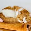 【猫学】猫にとって最適な室温とは?関東3LDKマンション住まいのわがやの冬の室温管理状況もシェアします。