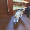 ❝階段の通行止め❞   愛犬と暮らす家の工夫②