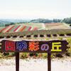 北海道の「四季彩の丘」は綺麗な花畑とかわいいアルパカを楽しめる素敵スポット