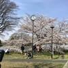 自転車で亀有さくら通り、水元公園、葛西用水桜通り、東綾瀬公園をハシゴ花見