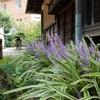 9月の高尾駒木野庭園に行ってきました