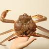 【ホットプレートで簡単に焼き蟹を食べよう!】境港で安く購入できるお店は?日本酒は千代むすびがおすすめ!