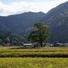 貴船神社の大くす 福岡県田川郡赤村上赤