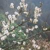 10月5日誕生日の花と花言葉歌句