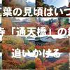 紅葉の見頃はいつ?京都で一番人気の東福寺「通天橋」の色づき具合を追跡
