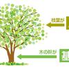 基礎が大切な理由は木に例えると伝わりやすい
