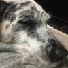子犬の頃から注意!寝たきりの犬がオシッコをしない
