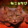 ちびっ子に優しい我が家のオス猫の話