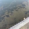 01/21…〈フィッシュオン王禅寺〉フラストレーション釣行…めげずに数釣りしてたら手首が悲鳴をあげた件。
