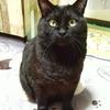 クマさんぬいぐるみバリに可愛い黒猫くん