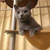 【猫さんと暮らす】フレーメンの顔が撮りたい【ズボラ主婦】