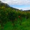 『ワイン体験レポート2年目』10月