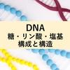 DNAの糖・リン酸・塩基の構成と構造