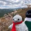 子ペンギンも桜に夢中!下千本へ向かう旅です(吉野お花見の旅その7)(188)