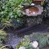 池の金魚達、水栽培のヒヤシンス