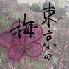 東京花見・梅・寒桜