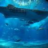 2018 沖縄旅行 ② -定番スポットの首里城&美ら海水族館ー