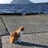 八丈 猫ポイント 八重根港