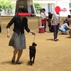 甲斐犬サンのドッグショー チャンピオンへの道ファイトーー!( ゚ロ゚)乂(゚ロ゚ )イッパーーツ!!