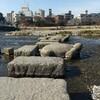 念願の上賀茂神社