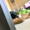 【愛猫日記】毎日アンヌさん#90