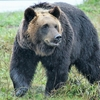 熊の行動が活発に・・・だから熊について書いてみた