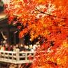 【エレカシ30thツアー】京都「ロームシアター京都 メインホール」2017.11.25 セットリスト