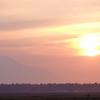 宗谷の自然、4月は「ミズバショウ・エゾノリュウキンカ」と「イトウのペアリング」