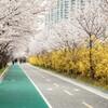 春よ来い!開花前線公開