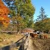 木曽馬を見に行ってきました