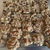 オートミールシリーズ第1弾【超簡単オートミールクッキーチョコチップとシナモンナッツ】【スイレンとしいたけその後】