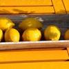 【知ってますか?】瀬戸内レモンと普通のレモンは何が違うのか?