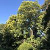 小石川植物園42